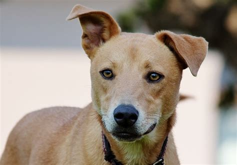 identify breed by characteristics breed identifier how to identify your mixed breed