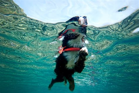 best swimming dogs the best swimming breeds all about dogs