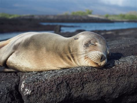 galapagos islands animals galapagos islands animals facts information and habitat