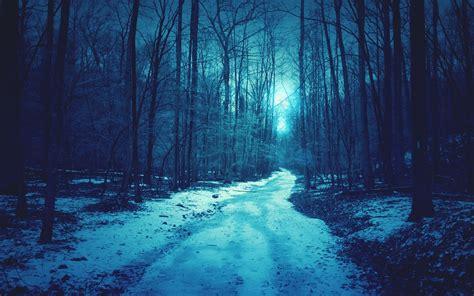 wallpaper blue forest blue forest winter wallpapers blue forest winter stock