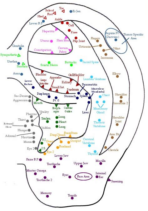 acupressure diagram of pressure points ear acupuncture point chart http www profitnessnetwork