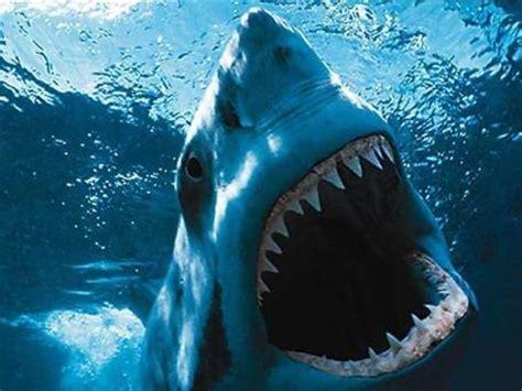 Wedding Cake Jacksonville Fl Florida Shark Facts Florida Beaches Florida Beach Vacation Shark Attack