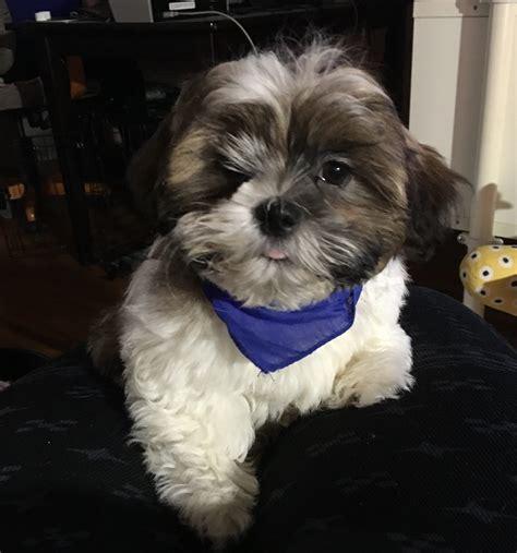 boutique puppies top 99 reviews and complaints about the puppy boutique