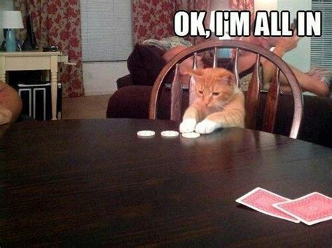 gambling cat goes all in on the card game