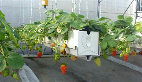 hanging garden troughs