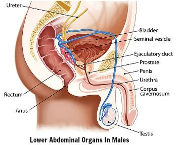 lower back and abdominal causes