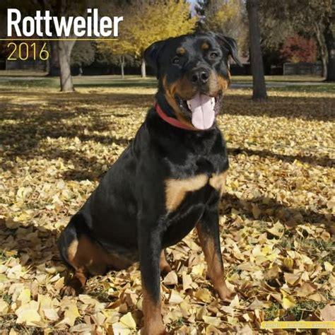 rottweiler gifts rottweiler gifts section rottweiler calendars