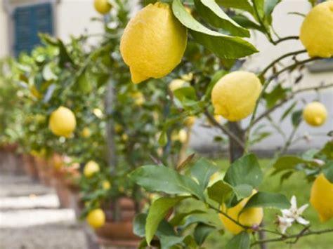 hgtv gardening ideas container gardening ideas pictures hgtv