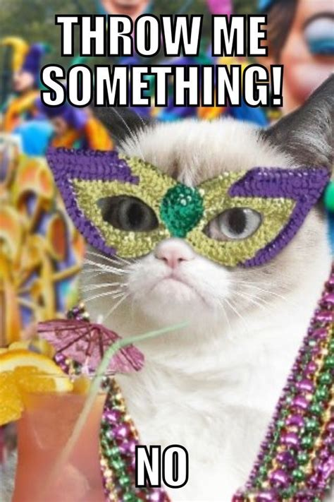 Fat Tuesday Meme - 1000 ideas about no cat meme on pinterest silly faces