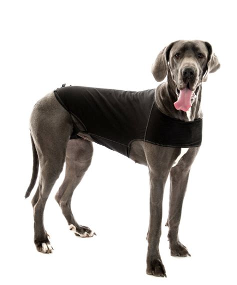 ttouch for dogs tellington ttouch the anxiety wrap