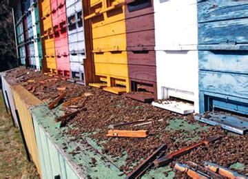 honey house plans honey bee houses plans house design plans