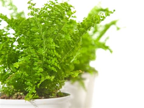 bloemen stoelinga groene kamerplanten assortiment bloemisterij stoelinga