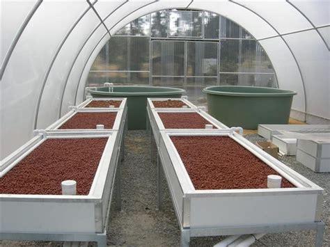 dream aquaponics and greenhouse system aquaponics