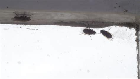 House Flies In Bathroom by Gruesome Footage Stock