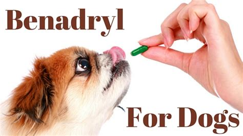 antihistamine for dogs benadryl for dogs safety dosage and more
