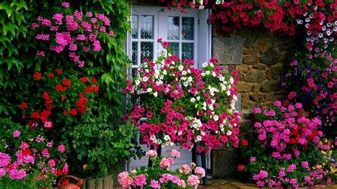 maintenance flowers  effortless garden