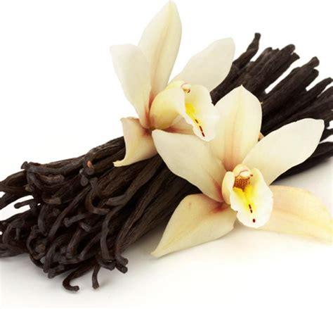 Sprei Madagascar theme fragrance original perfumes for extraordinary