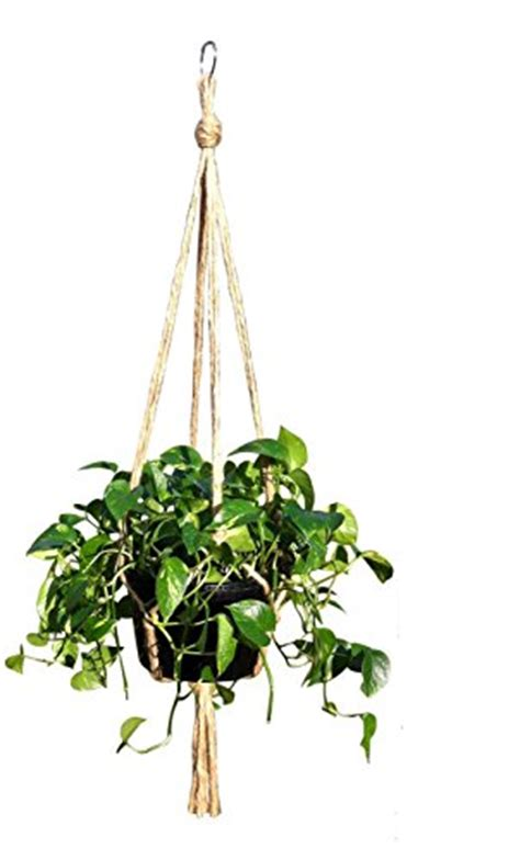 low light hanging plants indoors a brief guide to climbing and hanging plants