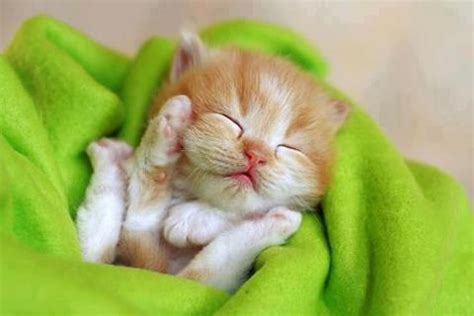 Funny cats: cute kittens