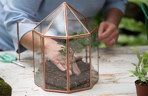 table top grow l how to plant a terrarium glass terrariums terrarium plants