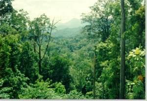 hutan dan manfaatnya
