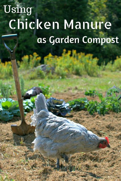105 Best Images About Gardening Know How Guest Blogs On Chicken Manure Vegetable Garden