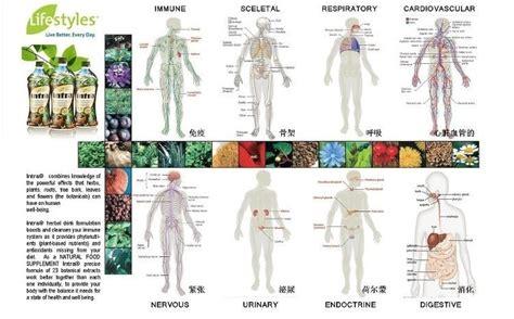 Intra Herbal intra herbal juice lifestyles canada intra lifestyles 23