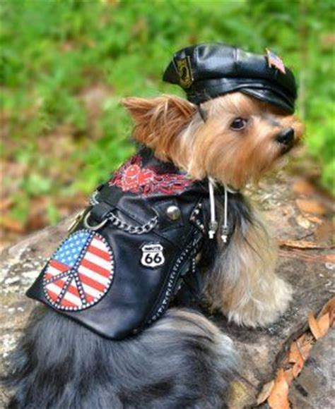 how to put a harness on a yorkie vests models and yorkie on