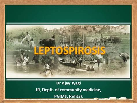 Leptospirosis Card Template by Leptospirosis Dr Ajay Tyagi Authorstream