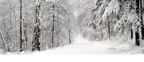 snowy forest facebook cover timelinecoverbanner com