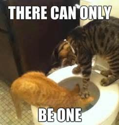 Funny Bitch Memes - funny cats there can only be one jokes memes pictures
