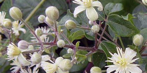 fiori di bach bologna rimedi floreali fiori di bach psicoterapeuta bologna saffi