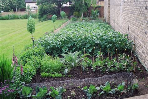 growing vegetables in backyard growing your own vegetables vegetable garden planting