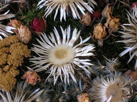 piante e fiori di montagna fiori di montagna foto immagini piante fiori e funghi