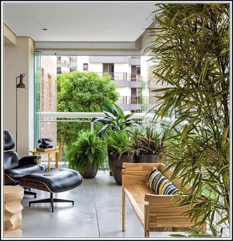 Balkon Sichtschutz Pflanzen by Hohe Pflanzen Als Sichtschutz Balkon Balkon House Und