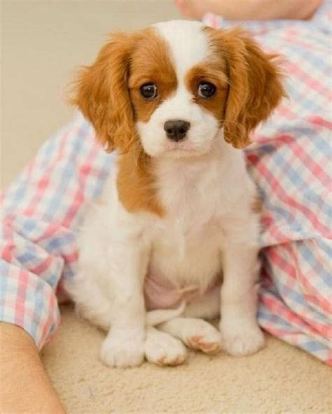 best puppy for toddler best small breeds for puppies puppys and for