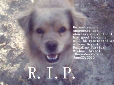 r for dogs r i p balidino michael bryant dogs photo 13257425 fanpop