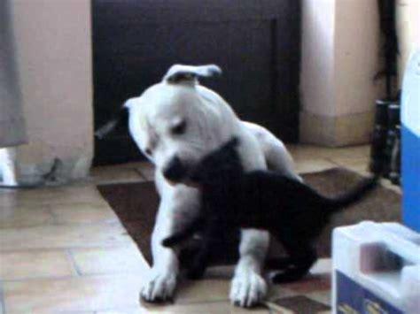 Hq 11113 Mix Black White Oversized Top black cat attacks big white