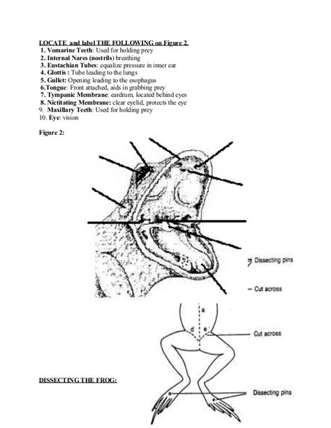 frog dissection diagram nares frog www pixshark images galleries