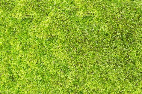 Bola Rumput Artificial Bola Rumput Buatan Bola Rumput Dekorasi 30 gambar alam abstrak menanam olahraga halaman rumput padang rumput tekstur daun bunga