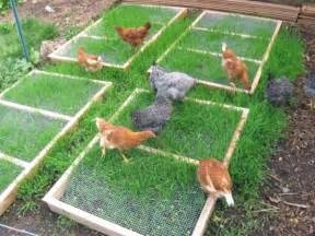 free grazing frame plans for backyard chickens coop