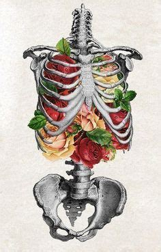 skeletons come out and places from drilling 1000 images about skeletons on pinterest skeleton