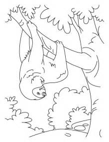 sloth coloring page tumbling sloth coloring pages free tumbling