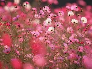 flowers by season spring flowers winter flowers summer