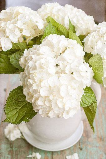 how to care for freshly cut hydrangeas come learn some surprising little tips hydrangeas