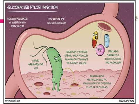 supplements h pylori helicobacter pylori