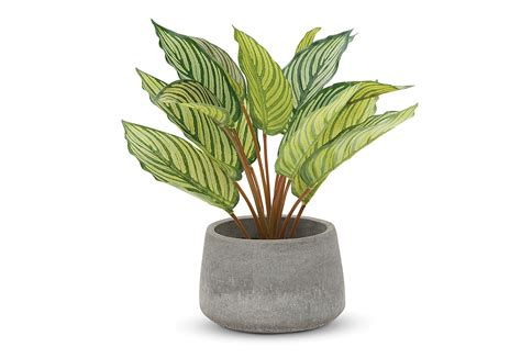 decorative artificial plants indoor plants amart furniture