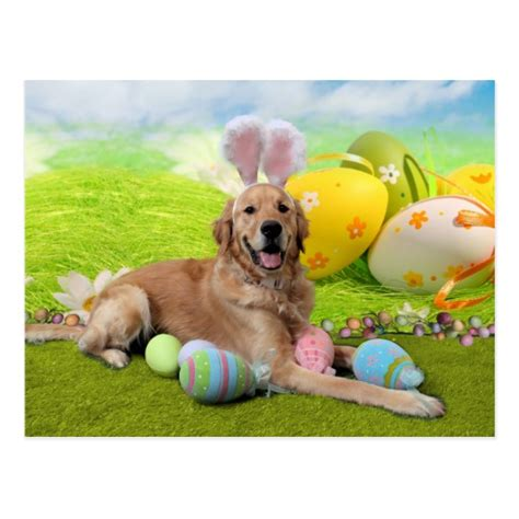 frank golden retriever easter golden retriever frank postcard zazzle