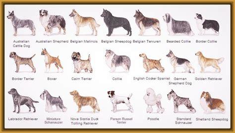 perros todas clases perros fotos todas razas para bajar imagenes de cachorros