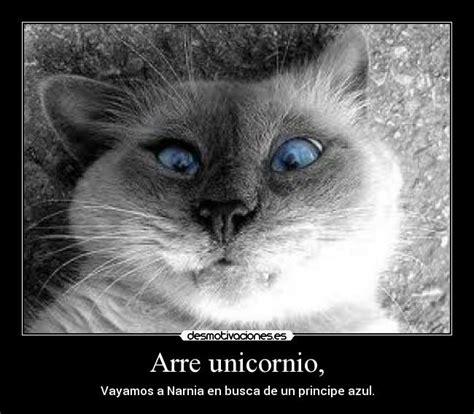 imagenes arre unicornio arre unicornio desmotivaciones